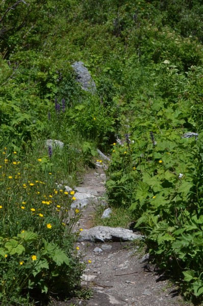 The trail in Granite Canyon reminded us of the Yellow Brick Road